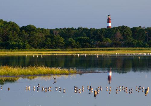 Chincoteague Island Vacation Rentals